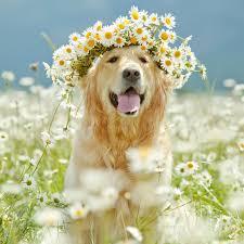 flowers puppy
